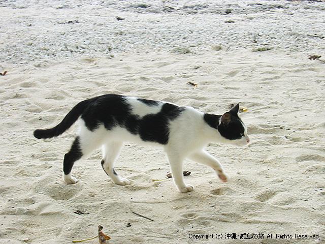 カイジ浜の猫