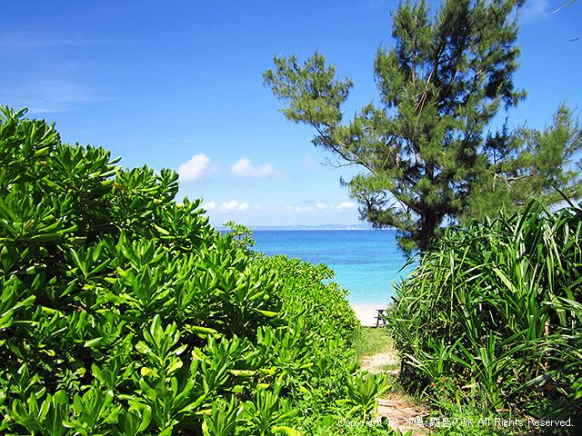 クサトベラの向うに見えるビーチ