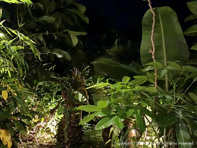 ジャングルのような庭