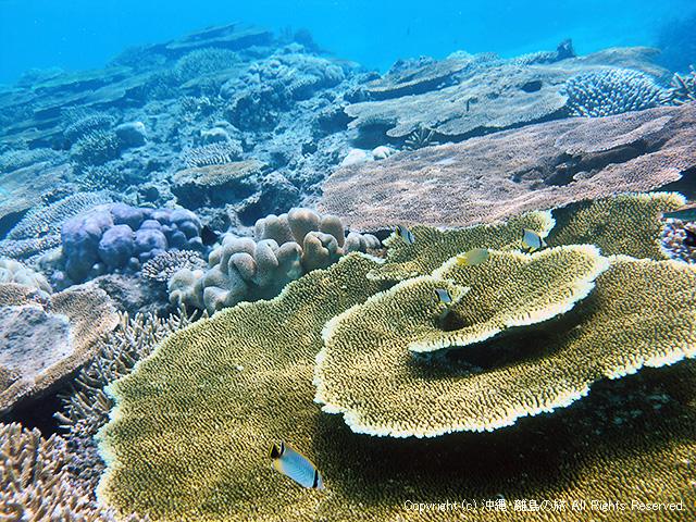 活き活きとしたサンゴ