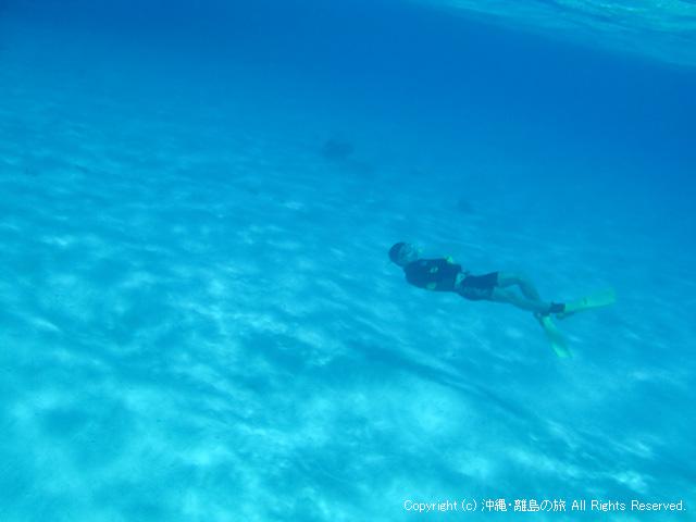 幻想的な世界を泳ぐバディ
