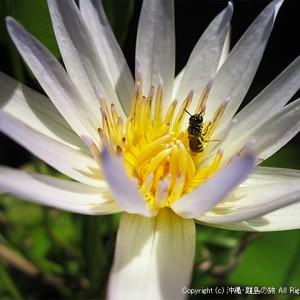 宿の庭で咲く睡蓮