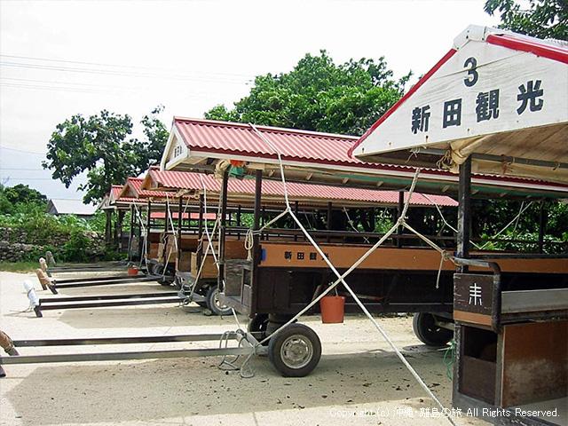台風対策のためにロープで結ばれた水牛車