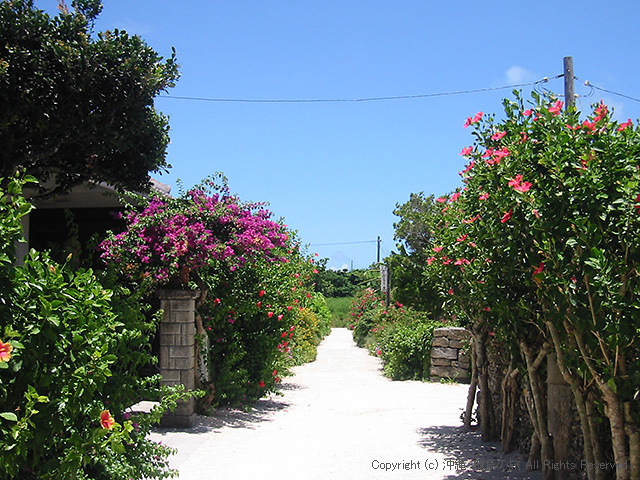 仲盛荘前の小道は花がいっぱい