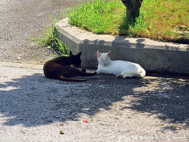 黒と白のネコ。スマン、可愛く撮れなかった。