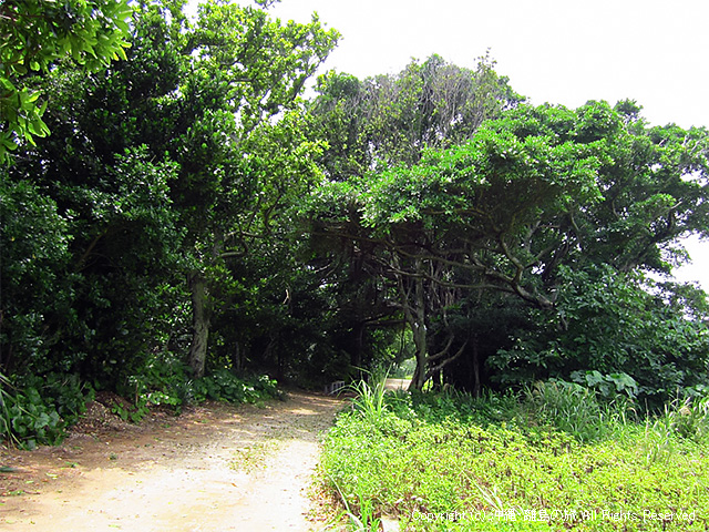 島の東側の道