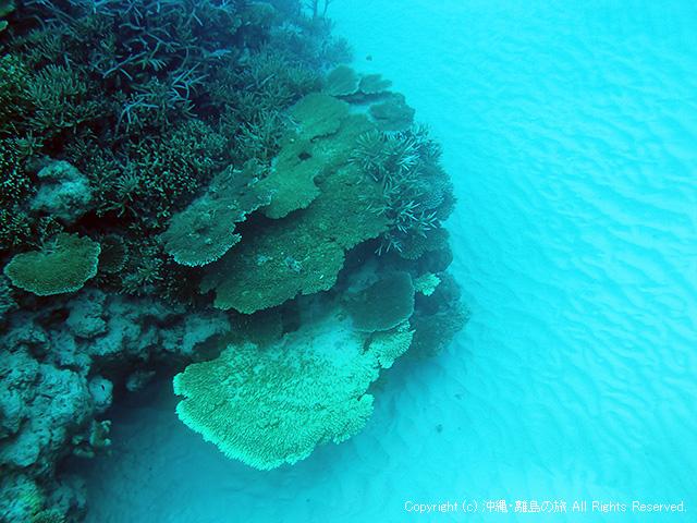 白砂にサンゴの根が映える