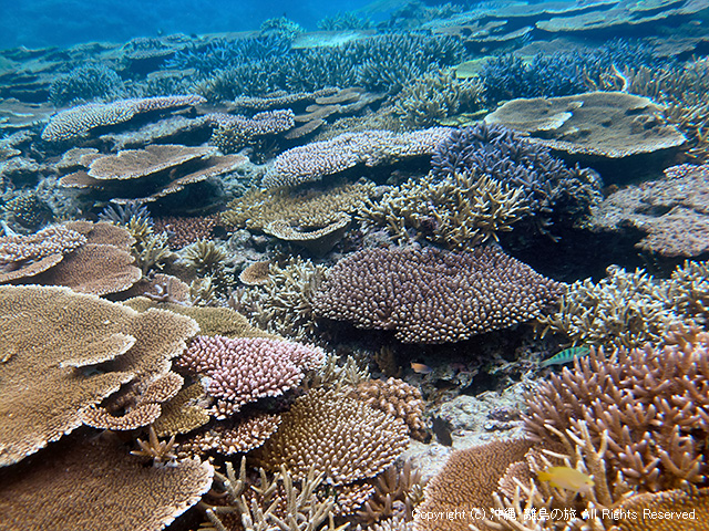 サンゴ・・