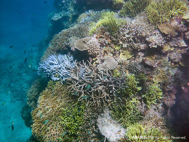 サンゴの山がすげえ