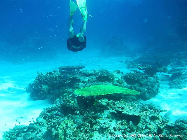 さらに潜水!
