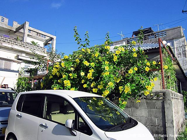 同宿の方のレンタカーが免責10万円号の前に・・