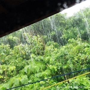 どざーっとバケツをひっくり返したような雨