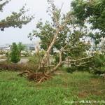 なぎ倒された植木